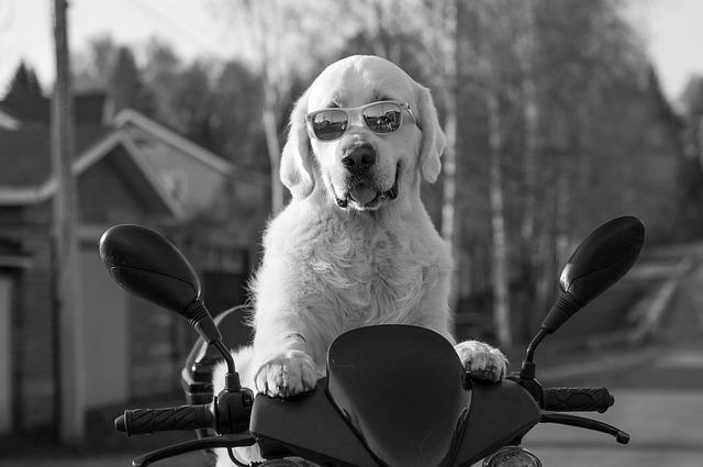 dog-2537902_640.jpg
