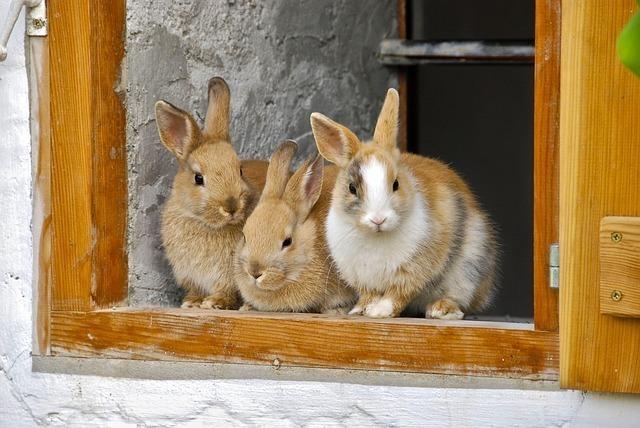 rabbit-2409186_640.jpg
